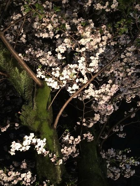 夜桜 清瀧神社